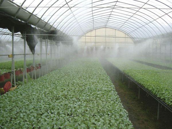 Микроклимат теплиц, зимних садов